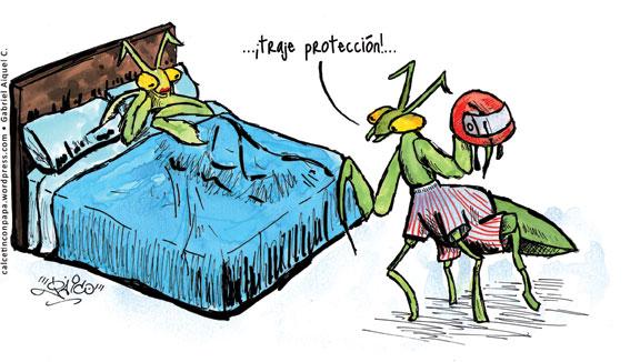 mantisproteccion