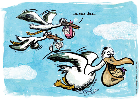 pelican-or-pelicant